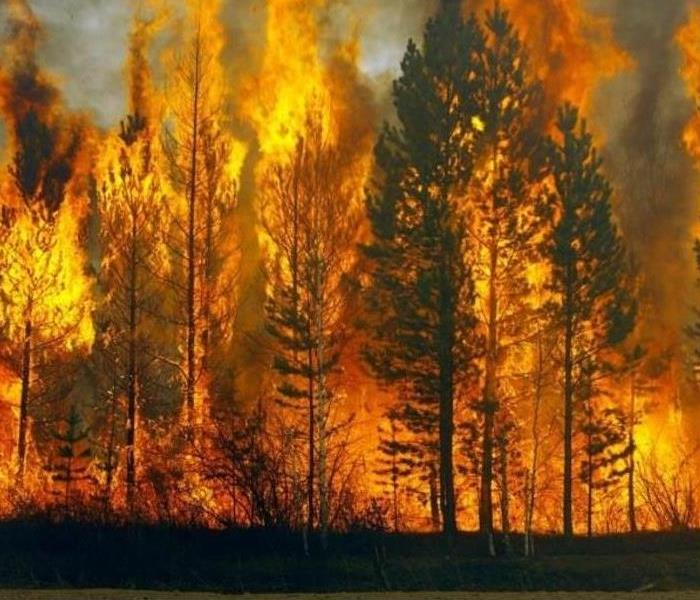 The image shows a large forest fire.